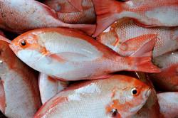 Fish-market, Negombo, LK ©Johannes Ratermann