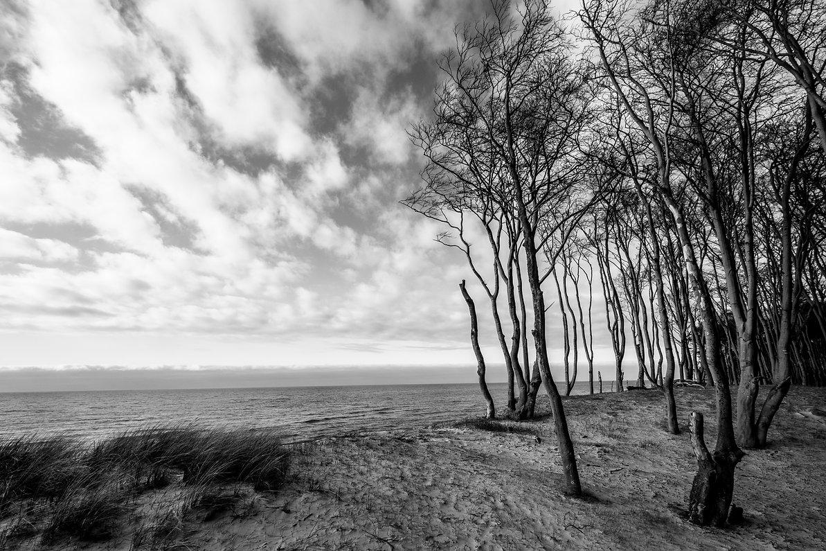 Buchenwald an der Ostsee ©Johannes Ratermann