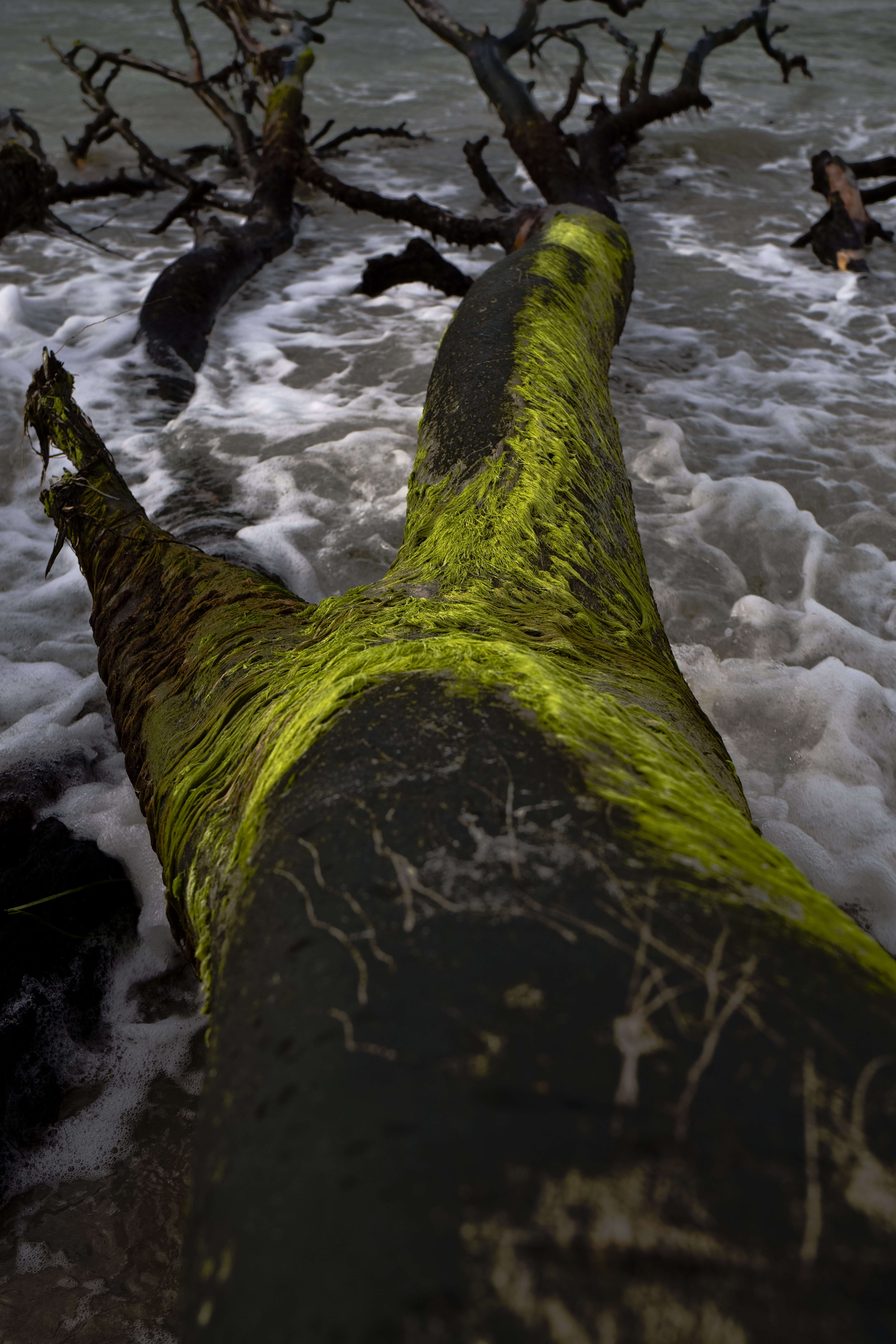 Torso eines Riesen im Wasser ©Johannes Ratermann