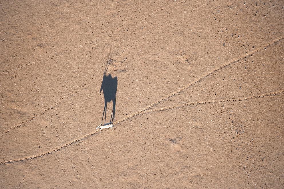 Shadow of an Orynx in the Namib, Sossusv