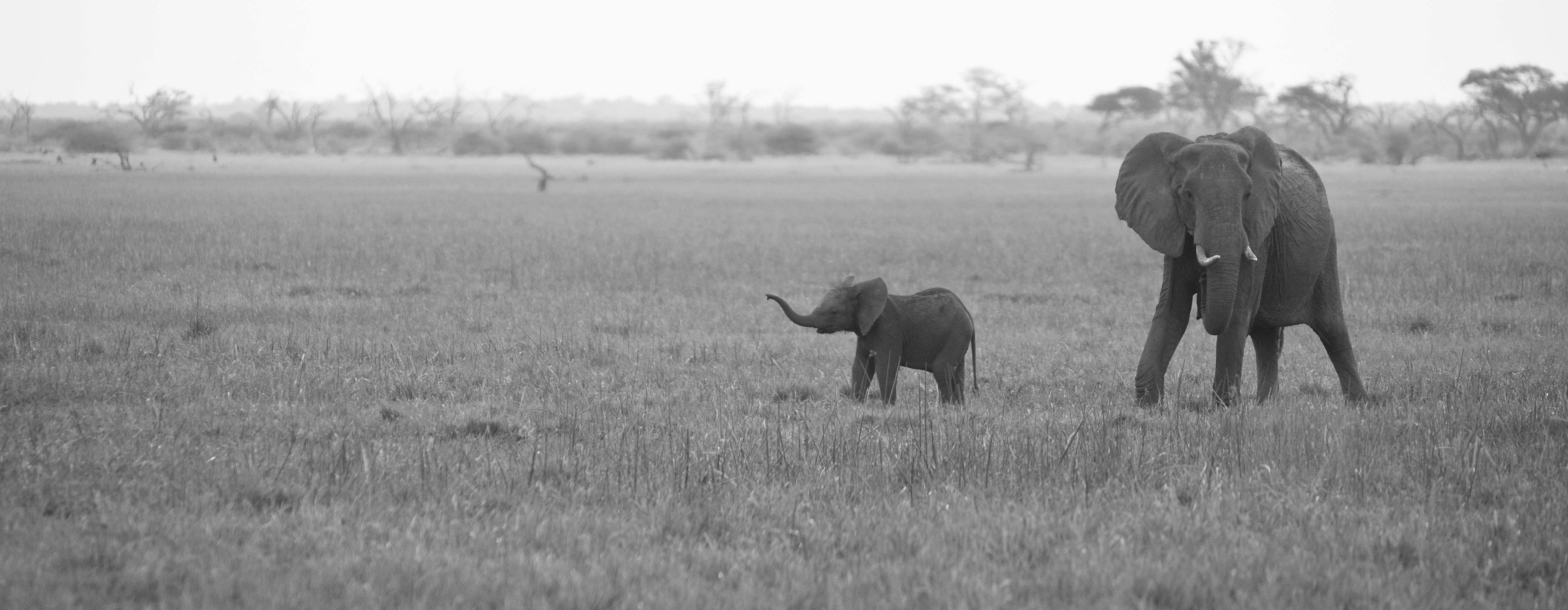 Elephant-Mother and Baby, BW ©Johannes Ratermann