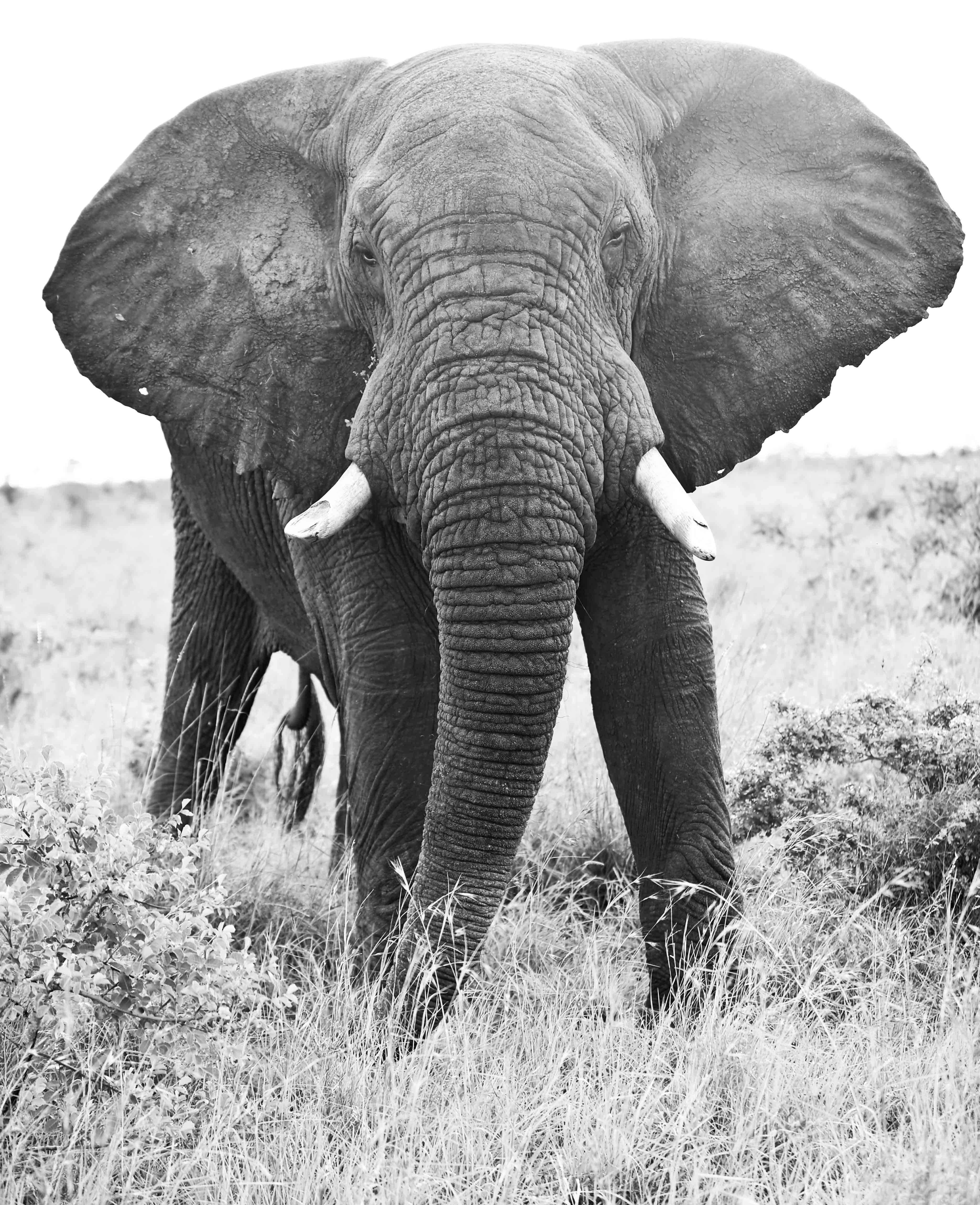 Elephant, ZA ©Johannes Ratermann