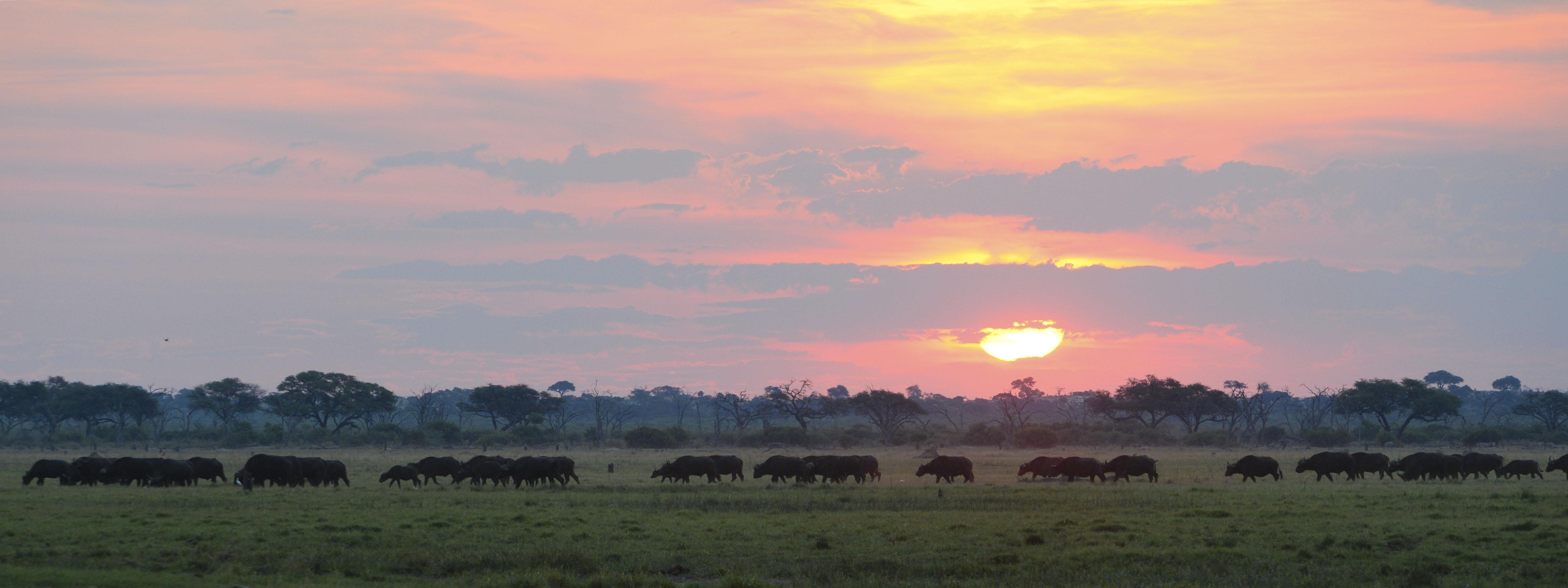 Sundown and Buffalos ©Johannes Ratermann