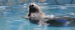 Seal, Relaxing ©Johannes Ratermann