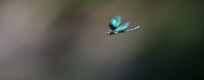 Libelle, DE ©Johannes Ratermann