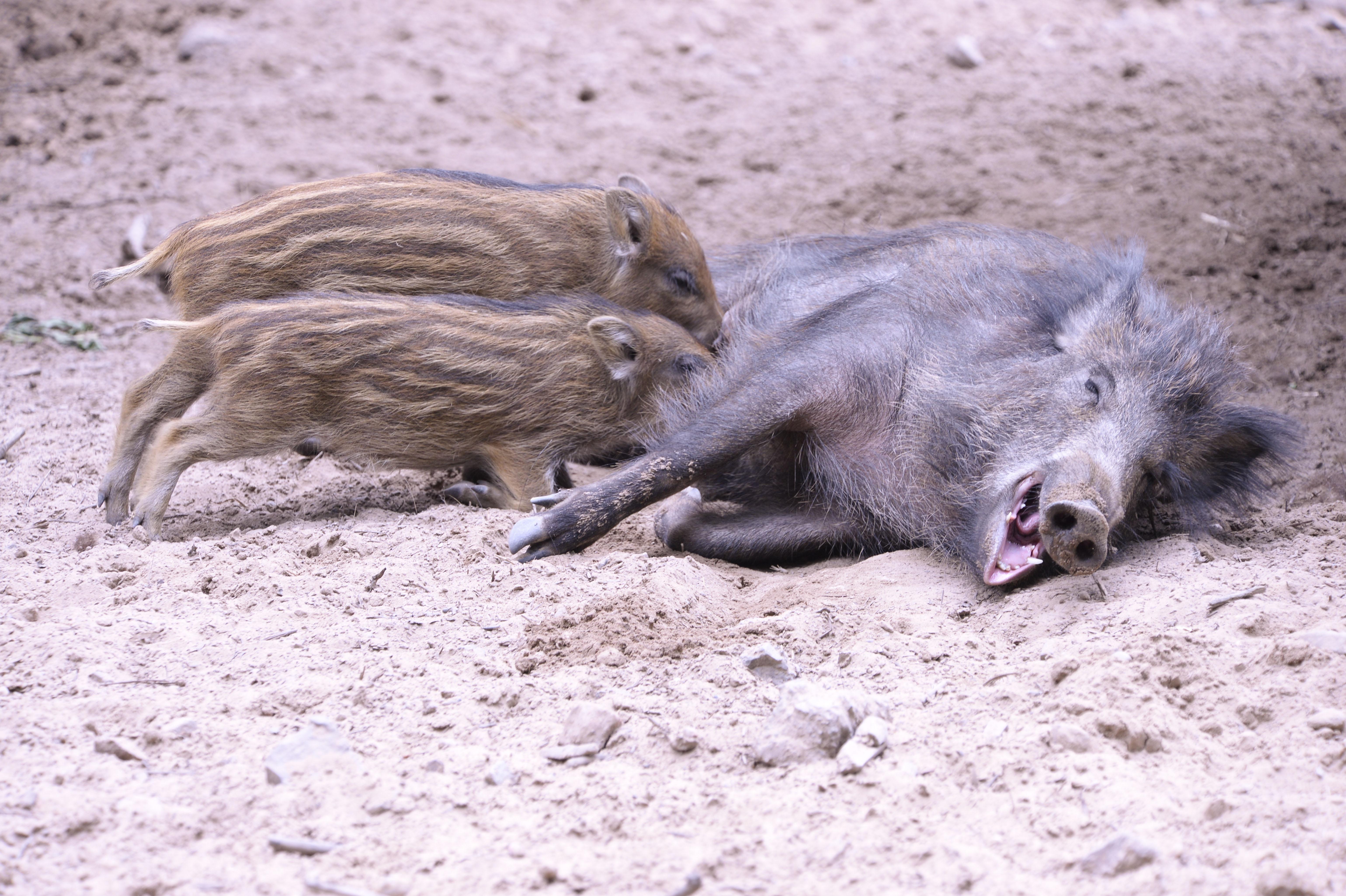 Schweineglück ©Johannes Ratermann.jpg