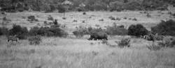 Rhino mit Jungtier, ZAS ©Johannes Raterm