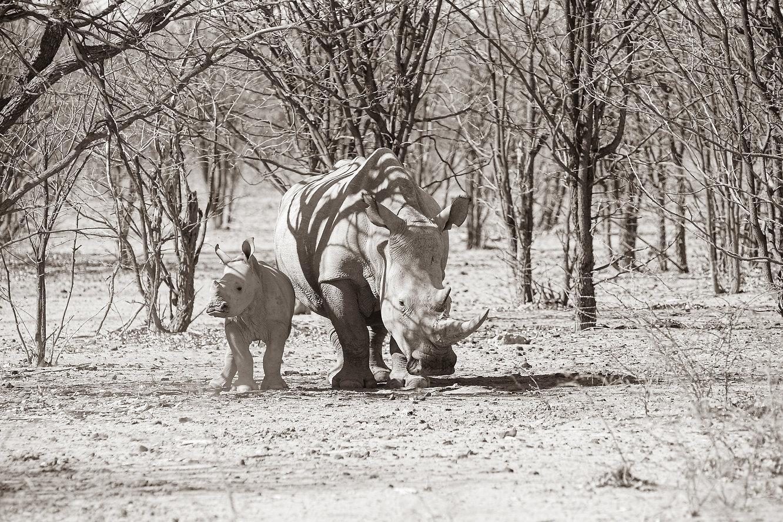 Nashorn mit Jungtier - Info für die Nashornkiller: irgendwo in Afrika ©Johannes Ratermann