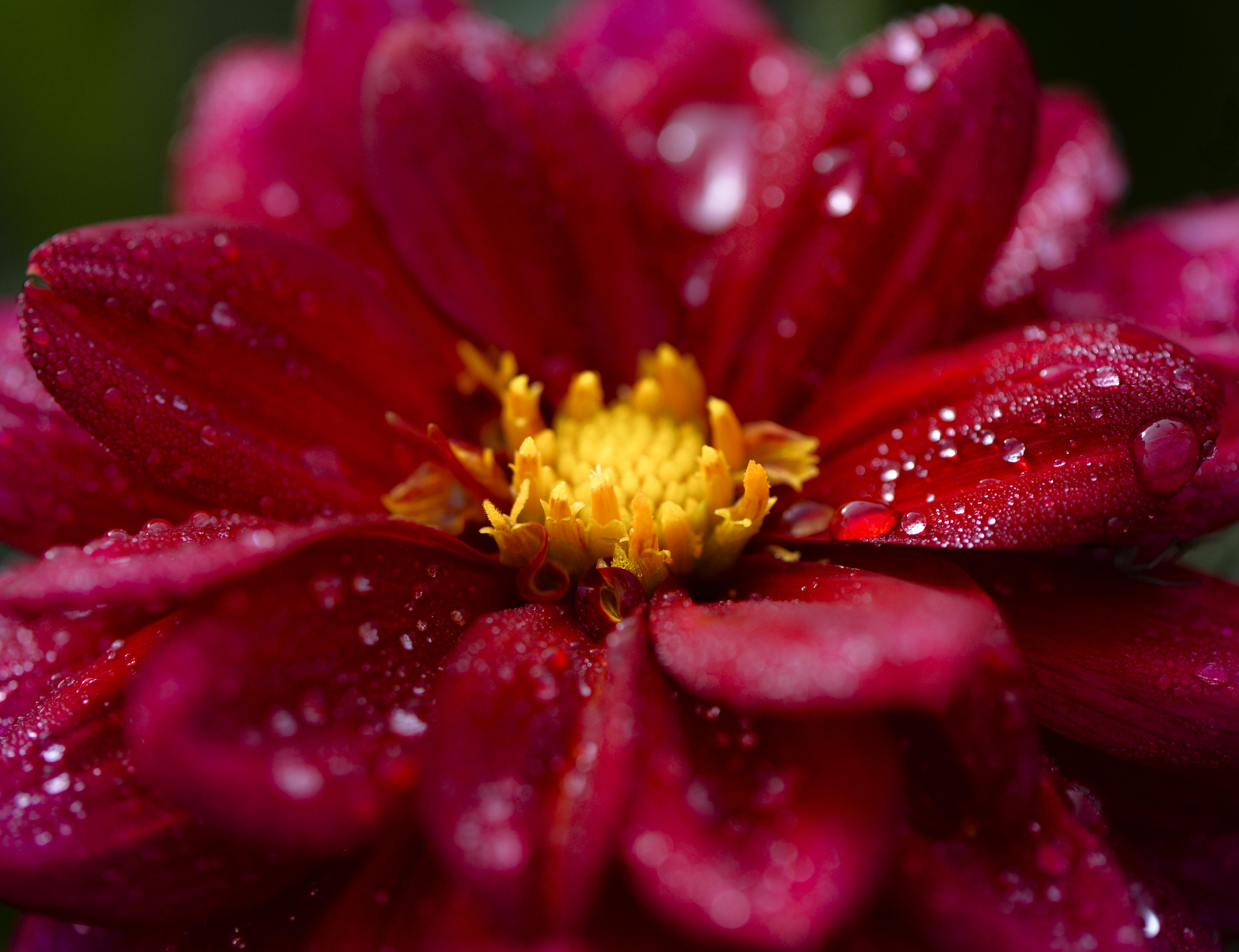 Blüte in der Wilhelma ©Johannes Ratermann