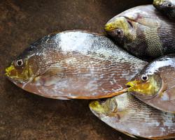 Fish market, Negombo, LK ©Johannes Ratermann