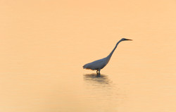 Heron, silver; DE ©Johannes Ratermann