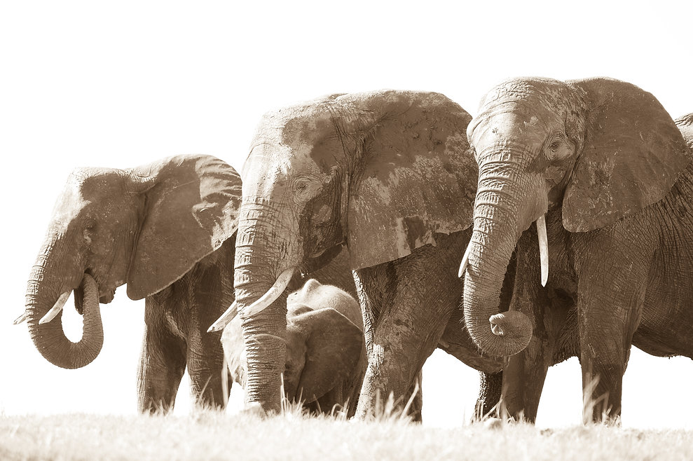 Elephantenherde mit Jungtier ©Johannes Ratermann