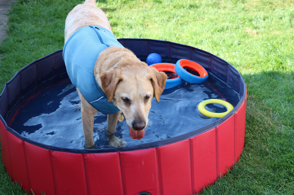 Blaze enjoying a play in his pool to cool down!