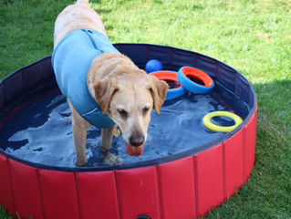 Keeping cool in the hot weather!