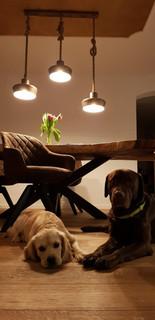Parkett, Stühle neu gepolstert, Lampe konzepiert, Stuckbild mit Echtgold.JPG