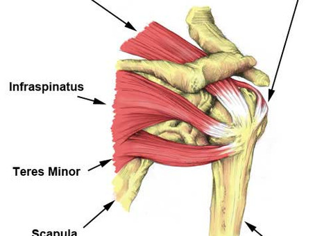 Rotator Cuff: What You Need to Know!