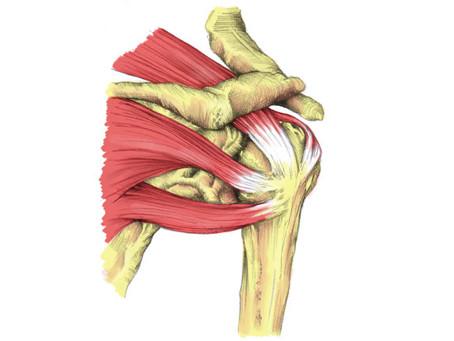 Rotator Cuff (Shoulder) Stretches