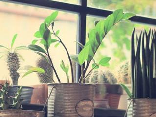 Plantas trazem bem-estar para a sua casa