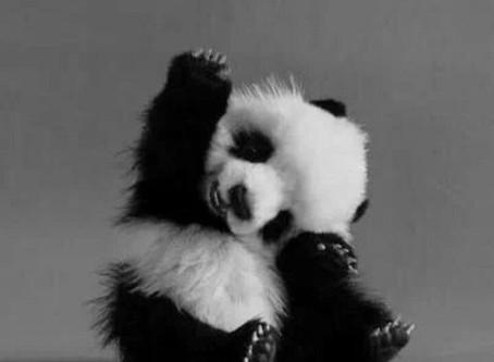 Mademoizelle Panda