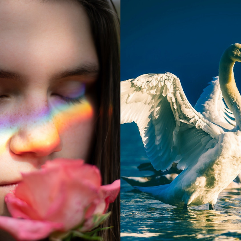 Female Rainbow Workshop: The Aphrodite Archetype