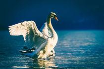 swan.aphrodite.jpg
