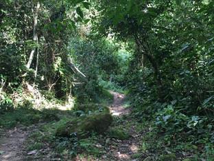 Botanical Reserve
