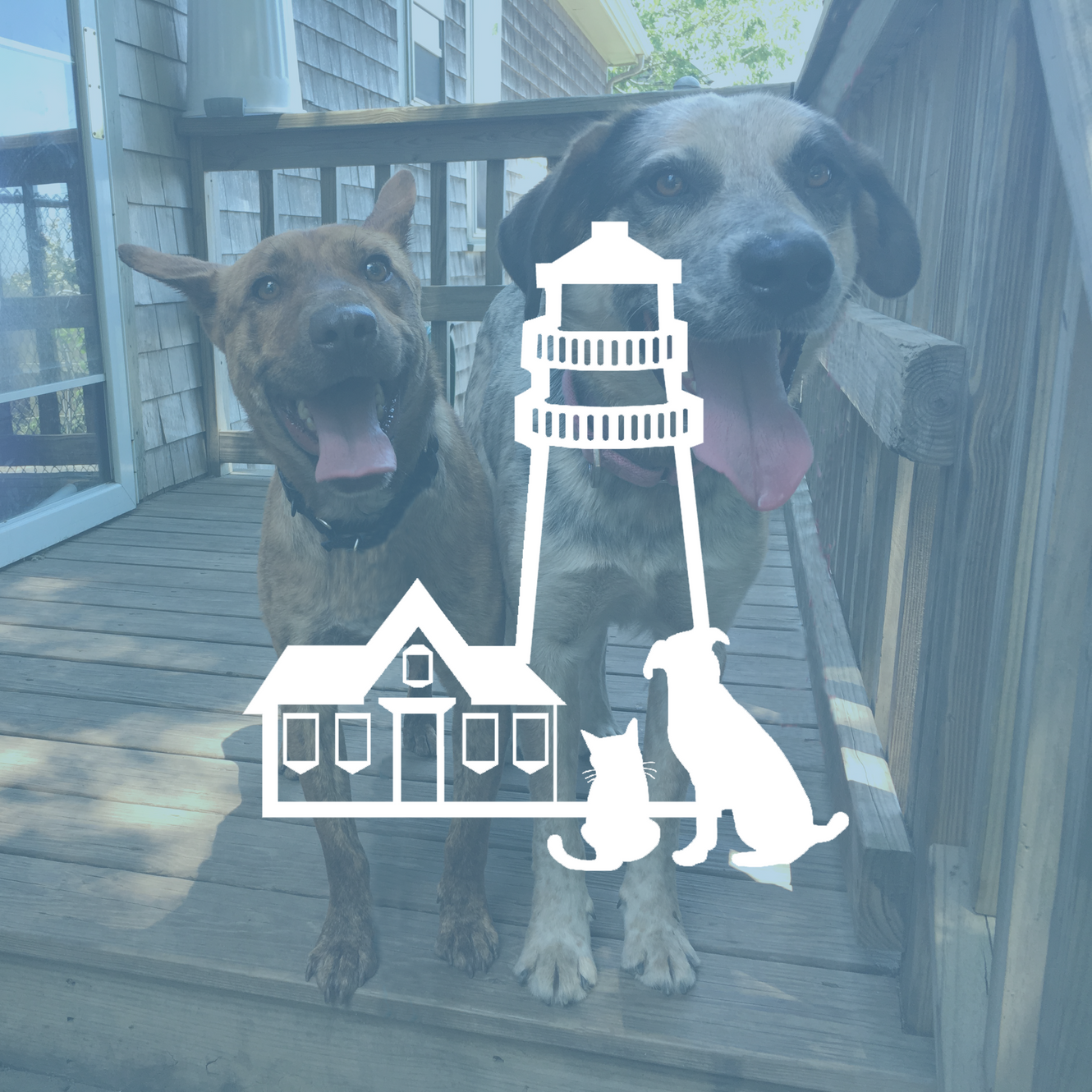 Lighthouse Animal Shelter | New Bedford | Adoptable Dogs & Cats