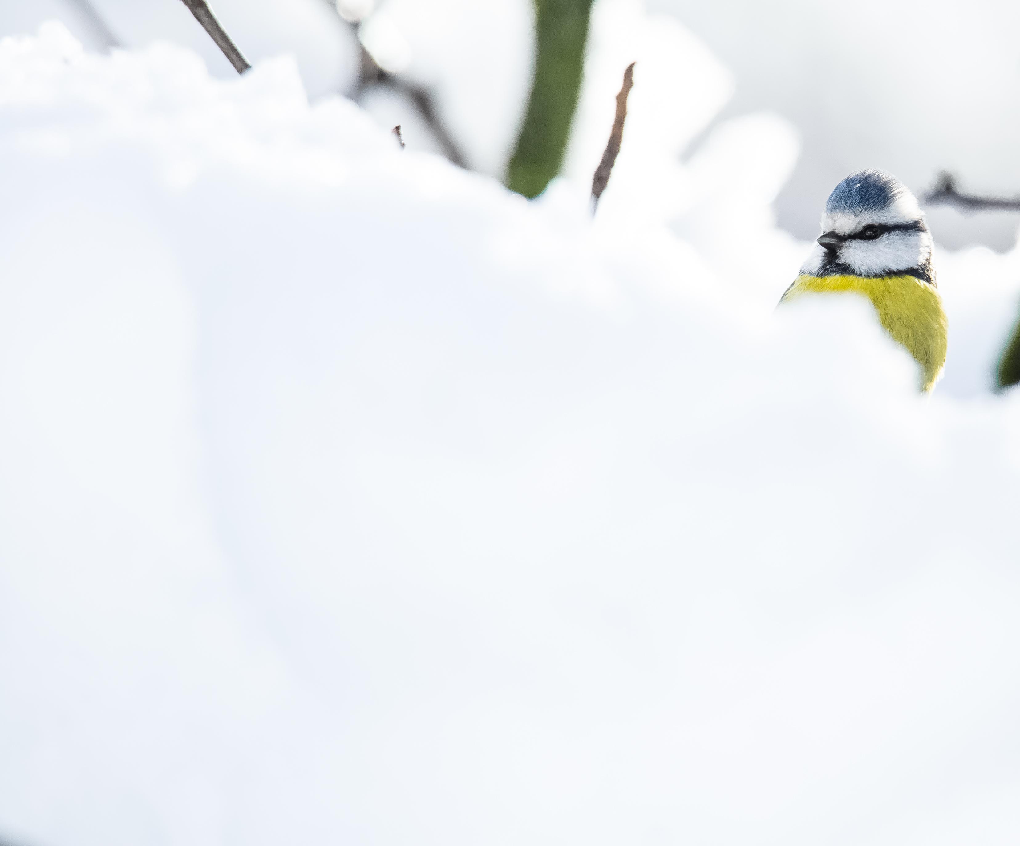 bleue neige