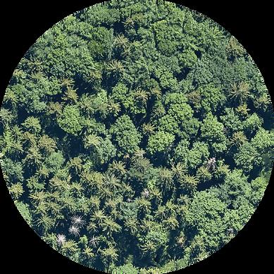 Luftbild und KI-basierte Bestandsanalyse von OCELL