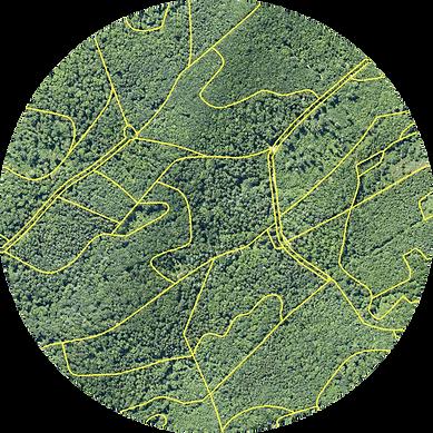 Vollständige Forsteinrichtung von OCELL
