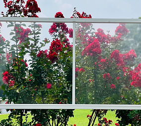 Panorma 313 - red flowers.jpg