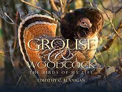Grouse-Woodcock.jpg