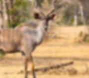 selous_national_park.jpg