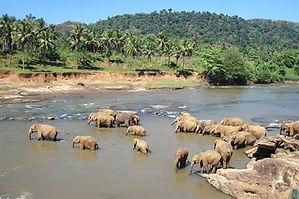 off-the-beaten-track-sri-lanka-wildlife-