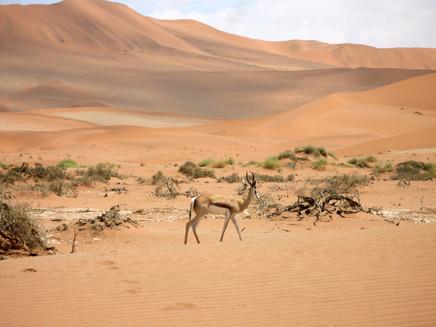 Desert Landscape - by Gregory Brown