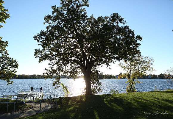 Tree_Pier_Fowler.jpg