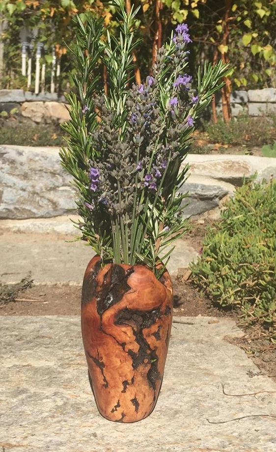 Redwood Burl Vase