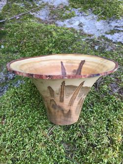Ambrosia Maple, Trumpet Shaped