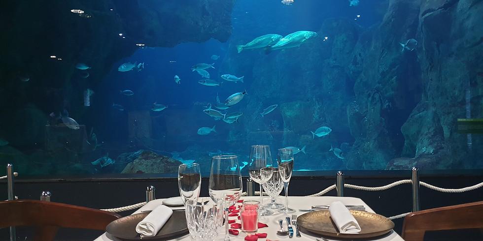 Cenas bajo el mar | 14 de marzo | COMPLETO