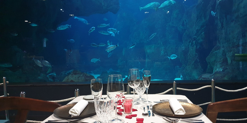 Cena bajo el mar   9 de mayo