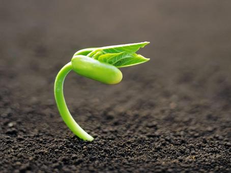 הצמיחה מבפנים