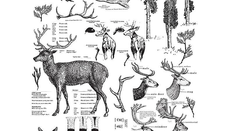 """'Deer' Decor Transfer 