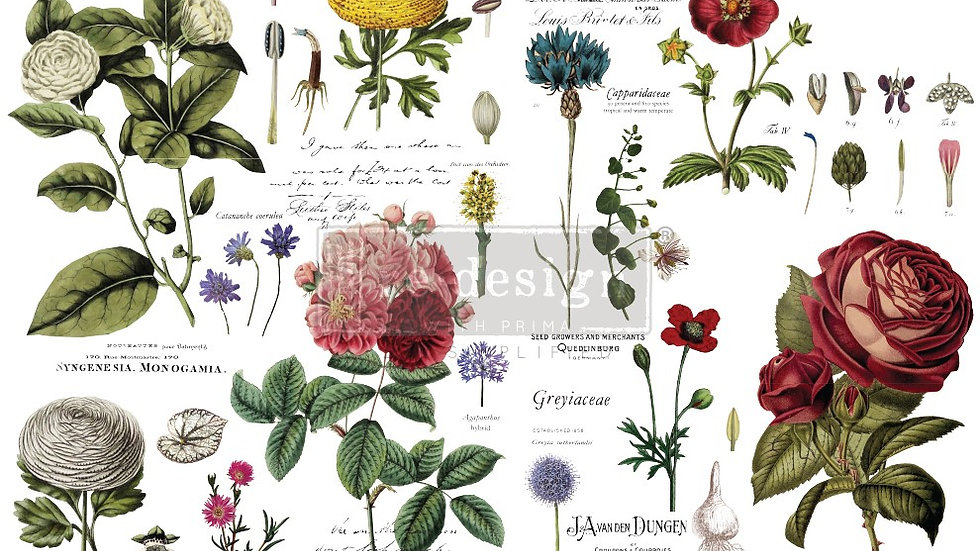 "BRAND NEW 'Vintage Botanical' Decor Transfer - Redesign With Prima - 48""x35"""