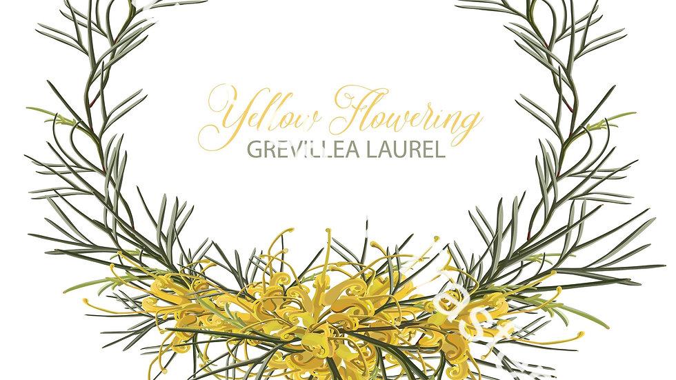 Australian Wildflowers III - Gumnuts & Grevilleas Dry Rub Transfer
