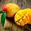 2 Marley's Mangos