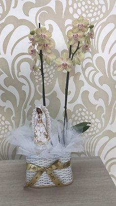 F62- Planta natural de orquídea con imagen
