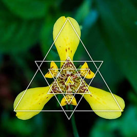 sacred geomtry in nature