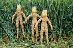 Wheat Field Spirits 2016