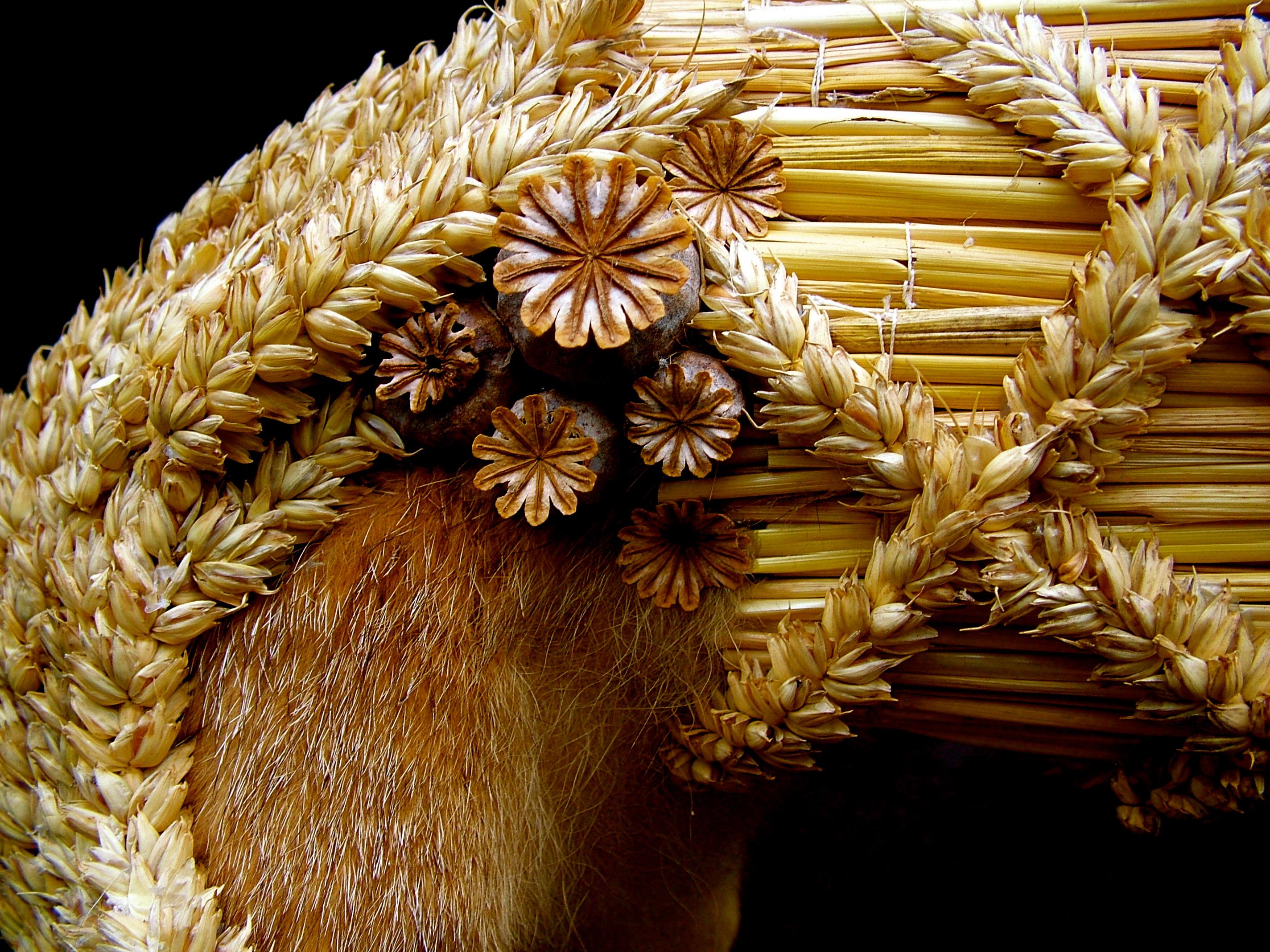 Victoria Musson folk harvest artist