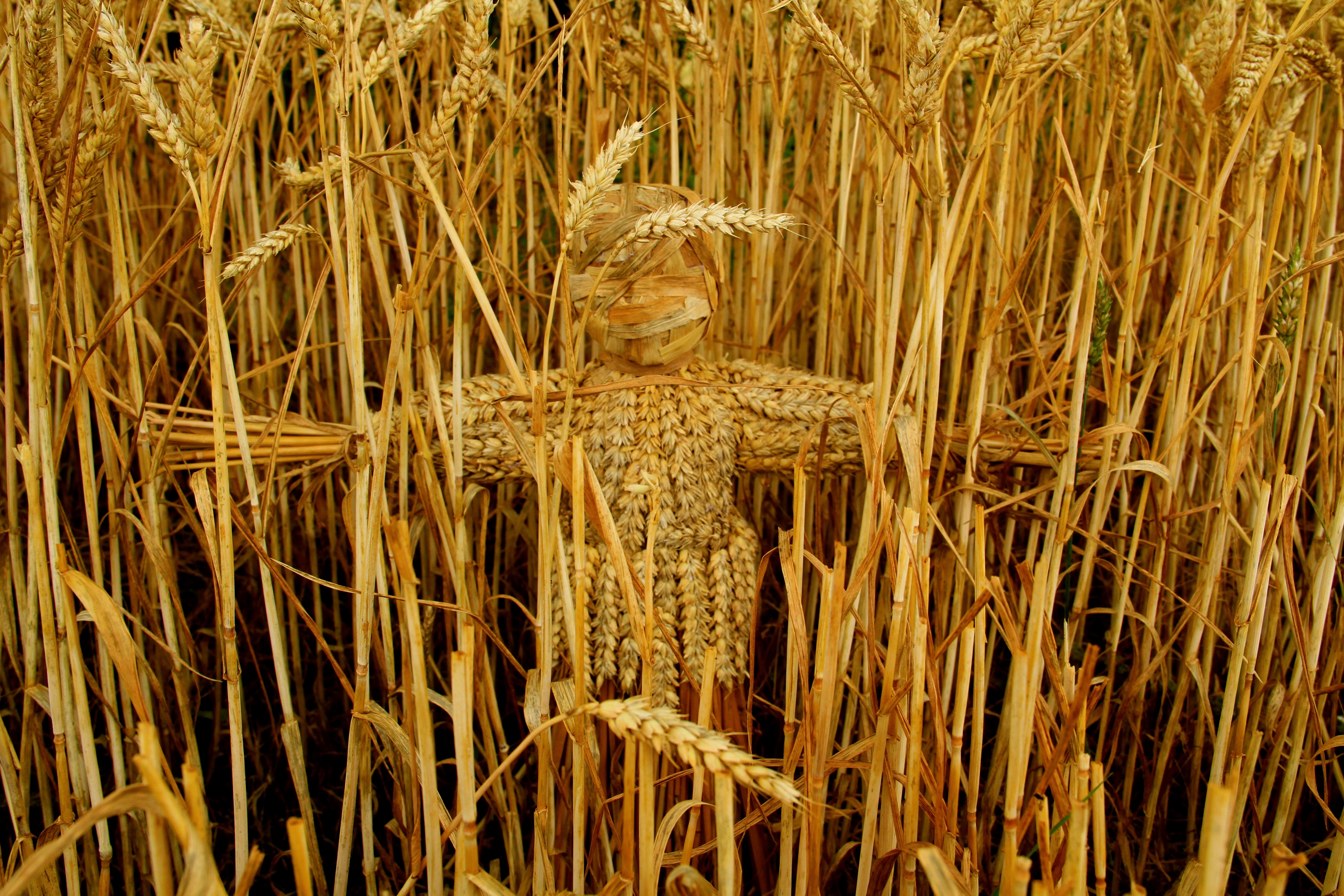 Spirit of the Wheat Field